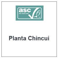 Planta Chincui